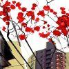 zoom Tokyo Street